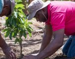 Tree-Planting Campaign to Preserve Dominica's Environment